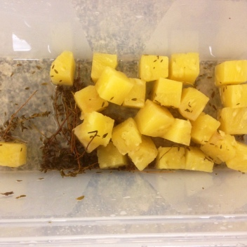 Poached Pineapples